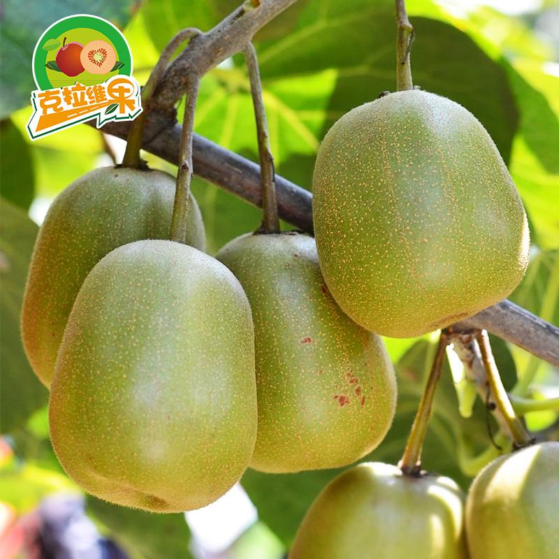 四川广元苍溪红心猕猴桃奇异果新鲜水果5斤包邮30个胜蒲江弥猴桃