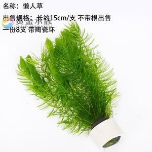 里的活金鱼藻热带鱼缸虾鱼缸
