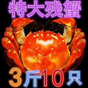 3斤净重公蟹大闸蟹大号残蟹鲜活螃蟹残次蟹断脚蟹次蟹包邮10只内