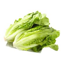 优选生菜蔬菜250g/份