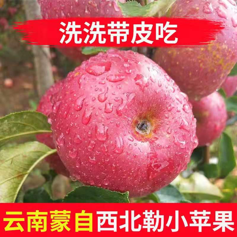 云南正宗西北勒小苹果野生农产品