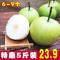 新鲜青酥梨现摘梨子孕妇水果雪梨香梨雪花贡梨皇冠梨脆甜多汁5斤
