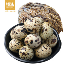 50 pieces of fresh quail eggs can be cooked by hengwo powder