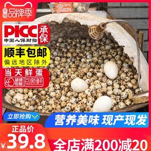 买一送一 农家新鲜生的鹌鹑蛋营养美味共发100枚顺丰包邮生蛋批发