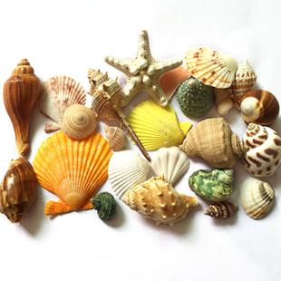 天然贝壳海螺海星套餐450克 打孔鱼缸造景地台婚庆家居装 饰