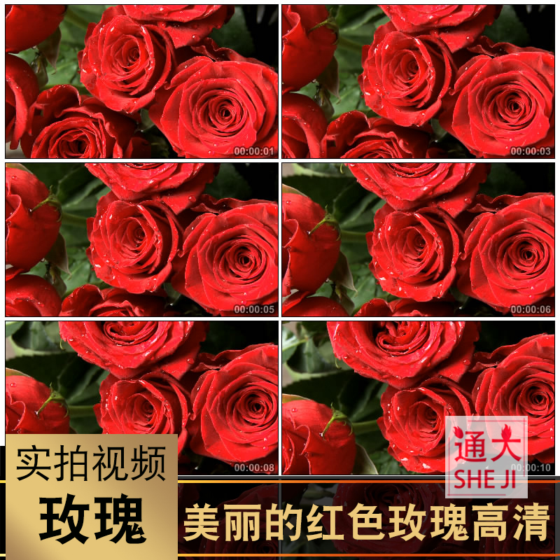 Beautiful red rose petal water drop close up stage LED large screen love background video material