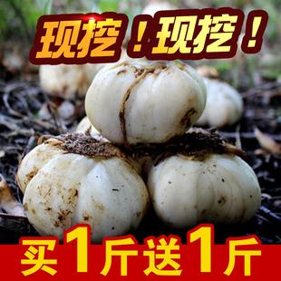 小魏甘肃兰州新鲜百合纯甜农家自产天然食用非特级大百合500g包邮