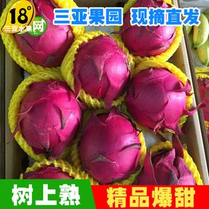 精品树上熟蜜宝红肉大果红心火龙果