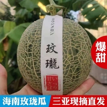 Hainan Meilong melon fresh pick Japanese quality fruit mouth honey melon ice cream melon 2