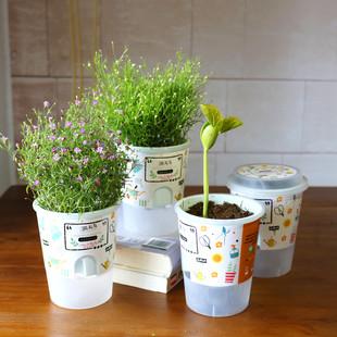 创意迷你桌面小盆栽幼儿园儿童小朋友DIY种植小植物魔豆植物礼物