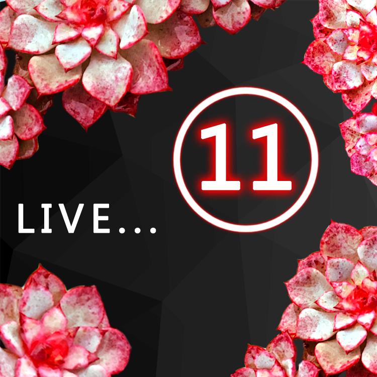 多肉植物 肉肉 盆栽 老桩 群生 孤品 15点直播专用链接 11号