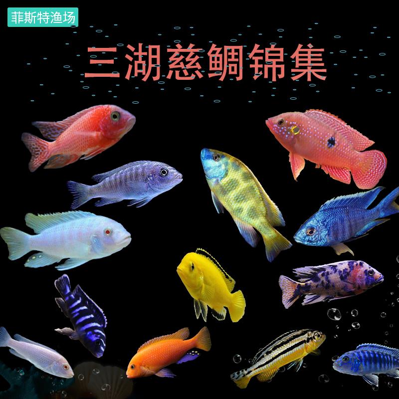 Рыбы Артикул 39495388365