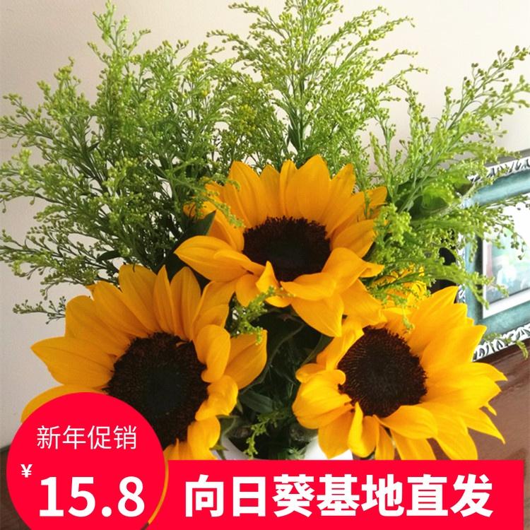 云南昆明基地直发新鲜向日葵鲜花家庭插花配送同城速递包邮