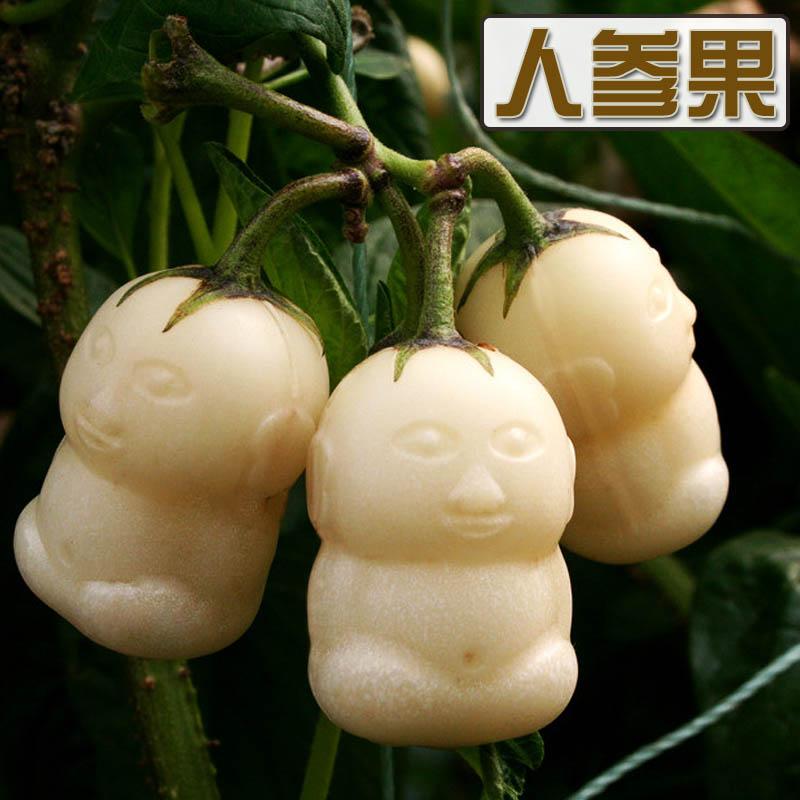 盆栽人参果苗现在种的秋季冬季四季播食用观赏盆栽植物娃娃模具