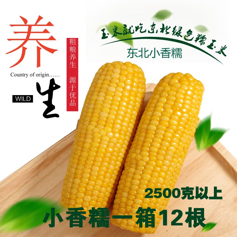 【12根】不甜小黄糯玉米真空东北粘苞米棒黏鲜香非转基因粗粮非白