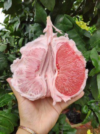 福建红柚子10斤整箱平和红肉柚子水果现摘新鲜包邮当季3-5个柚