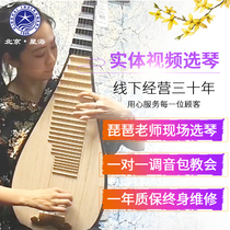 Xinghai pipa Musical instrument children adult playing beginners entrance test grade pear wood 8901R small pipa Rosewood
