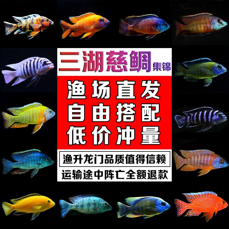 Рыбы Артикул 593510571754