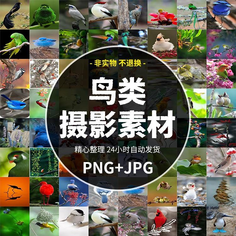 Magpie, bird, crane, sparrow, hawk and Falcon
