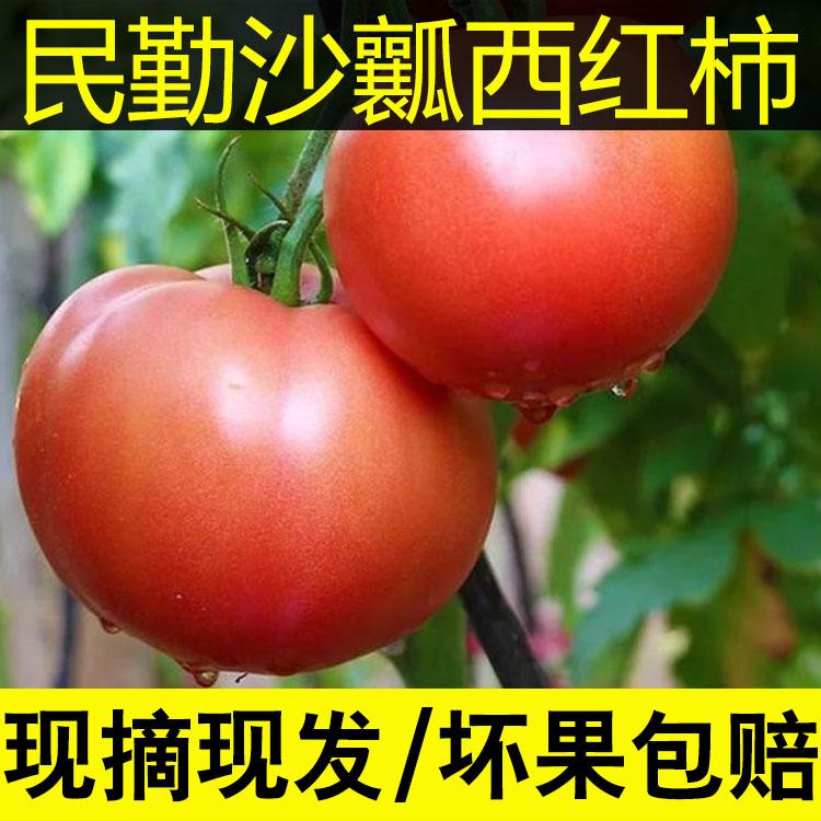 西红柿新鲜沙瓤水果蔬菜番茄新鲜生吃农家孕妇普罗旺斯5斤包邮
