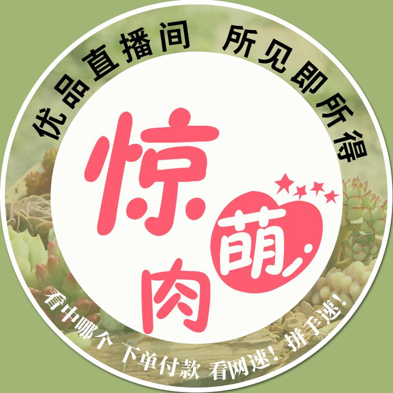 【直播专拍】【萌多肉组合盆栽】优品多肉植物  满68元22个省包邮