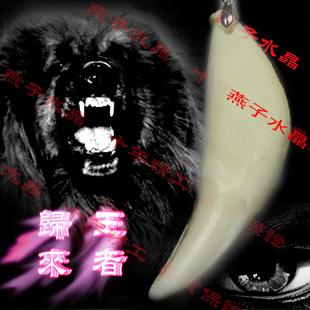 King King imitation of Spike natural tooth Tibetan mastiff dog teeth bone pendant genuine Necklace 5cm M