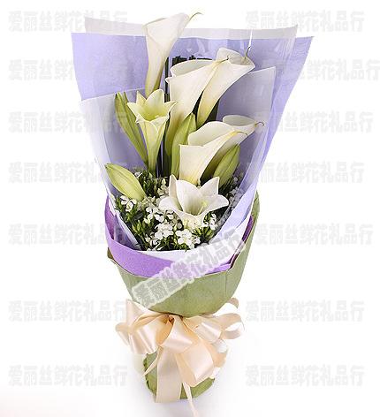 白色海芋花 马蹄莲鲜花鲜花速递送男性朋友生日鲜花北京鲜花店