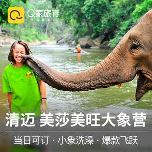 Q家旅行 清迈大象营一日游美莎美旺半日游清迈骑大象丛林飞跃