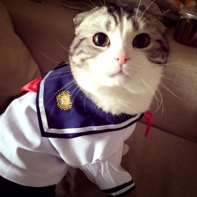 Пакет почты кошка кошки одежду Голубая короткошерстная животное одежда кошка собака одежду от весны летняя школа единообразных юбки матроска