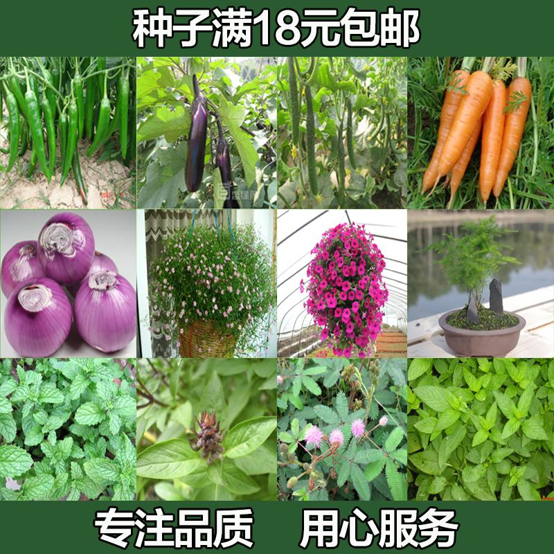 四季播蔬菜种子农家薄荷文竹牵牛花紫苏香菜瓜果种子花卉种子包邮
