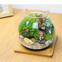 Surface Moss Micro landscape ecological Bottle Creative Office Green planting mini potted plant miniature desktop decoration