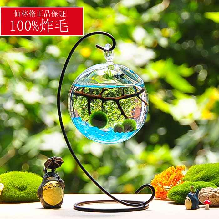 海藻球新奇植物微景觀生態瓶