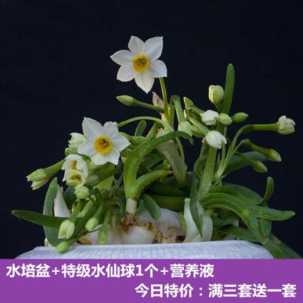 室内水培绿植花卉水仙花套餐拍下4.6元起包邮