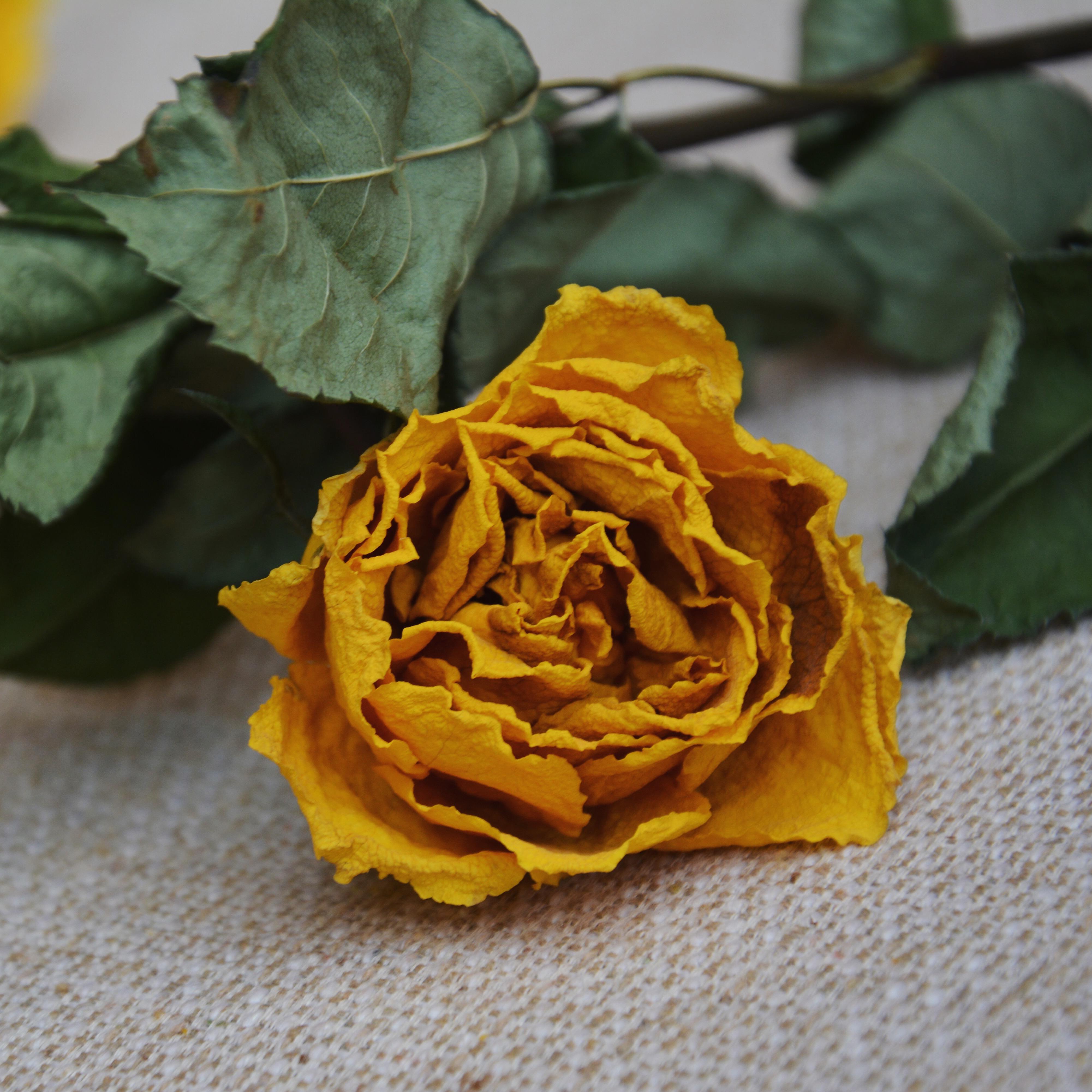 Императорская корона желтые розы сухие цветы 3 филиал натуральные высушенный DIY букет сухие цветы лесоматериалы домой магазин декоративный сухие цветы