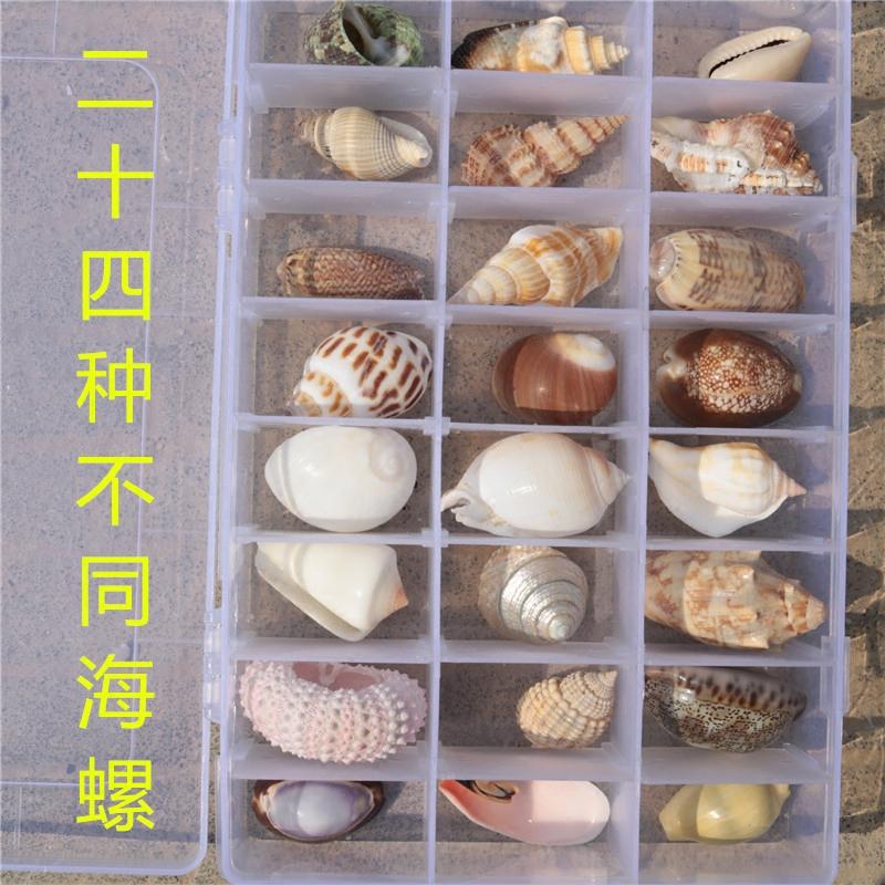 套餐大贝壳海螺海星珊瑚摆件水族箱