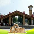 吉林省长春市东北虎园门票