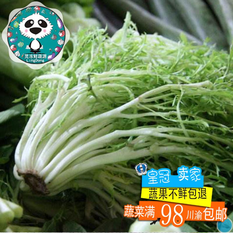 苦叶生菜西餐蔬菜新鲜苦菊狗芽生菜苦苣狗牙沙拉云南蔬菜特菜500g