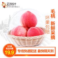 新鲜采摘香甜多汁大个水蜜桃5斤