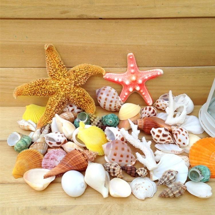 海螺贝壳大套餐+2个海星+珊瑚枝 鱼缸水族造景 婚庆地台创意装饰