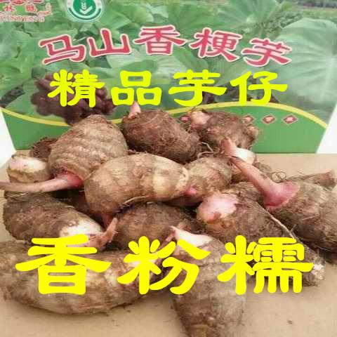 无锡特产马山芋头有机正宗香梗毛紫红芽芋艿6斤装土特产火热销售
