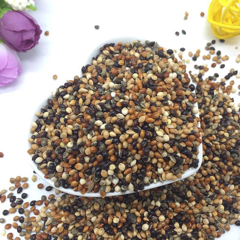 黑白红黄青黍子 5色混合黍子 鹦鹉