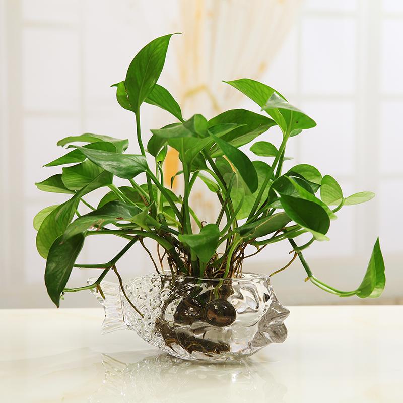 簡約家居擺件 水培綠植綠蘿花瓶 玻璃擺件客廳茶幾工藝品裝飾