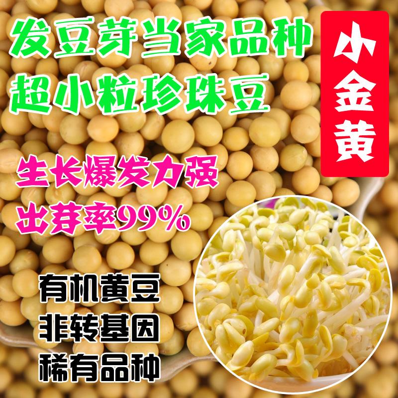 農家では遺伝子組み換えなしでもやしを作る納豆豆専用の小粒真珠粒黄もやしの種は黄金250 gです。