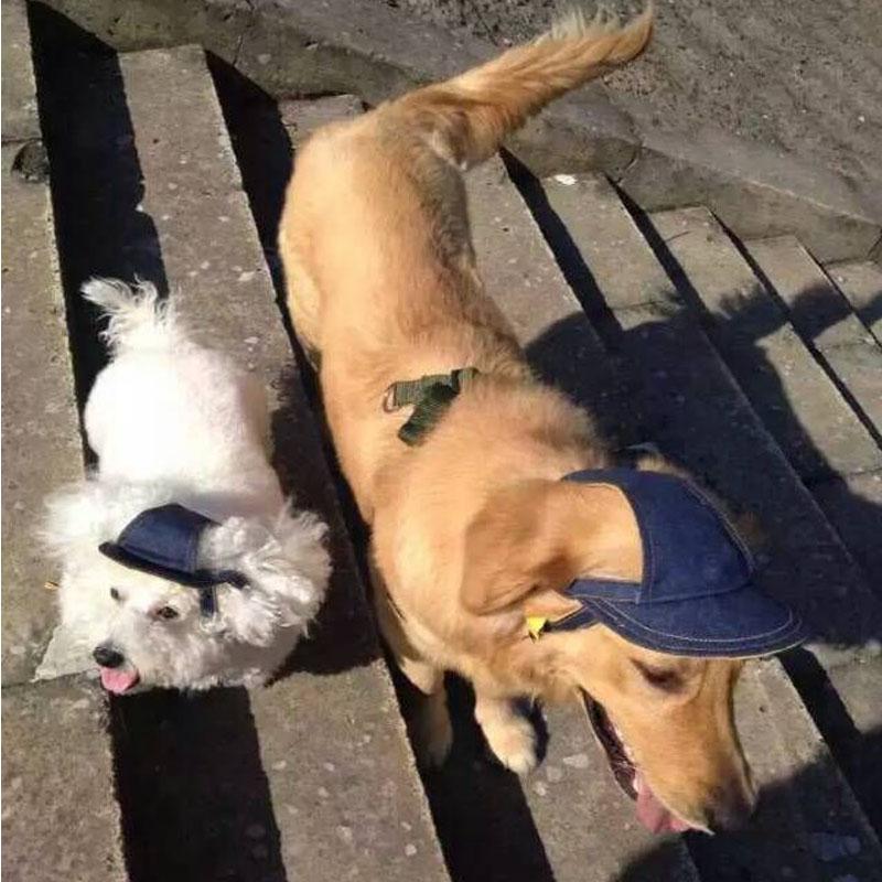 Pet hat dog hat large dog golden baseball hat sun hat Labrador headgear pet products