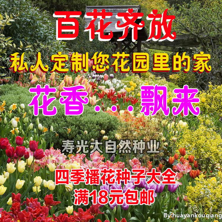 四季播盆栽花卉�N子香草玫瑰百合花�M天星薰衣草太�花�颗;ǚN子