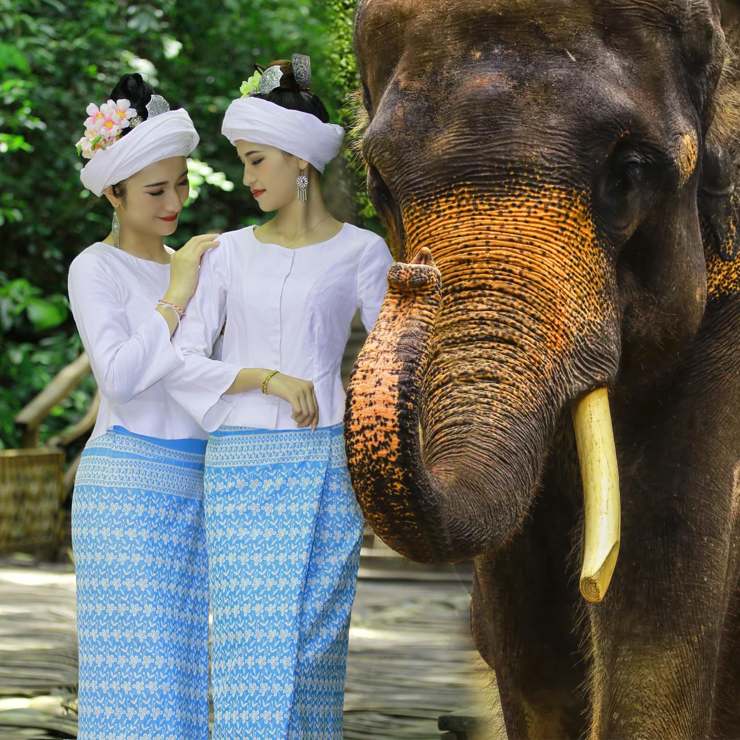 云南旅游西双版纳野象谷、基诺山寨纯玩1日跟团游