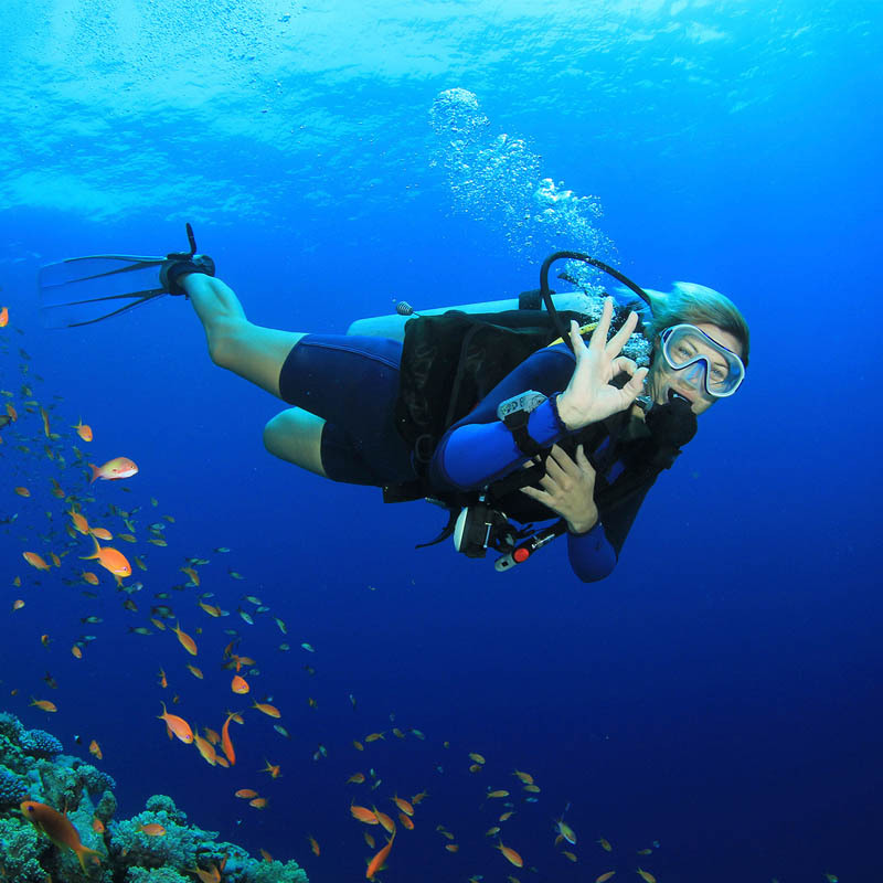 Study on diving certificate PADI of barikasa ow / AOW in peppermint Island