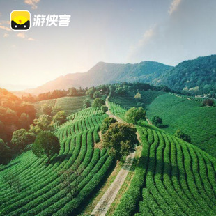 杭州旅游采制龙井茶体验 龙坞茶园 亲手采茶炒茶