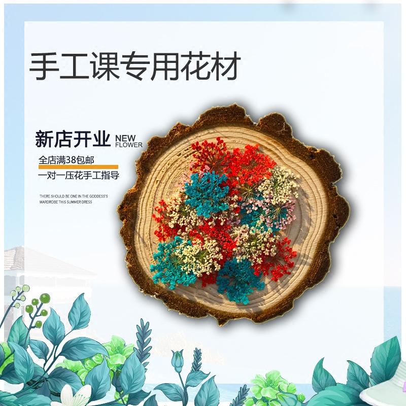 雪珠花蕾丝天然干花滴胶压花画植物标本押花书签手工diy材料包