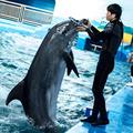 石家庄动物园门票+海洋馆门票海洋公园套票联票通票